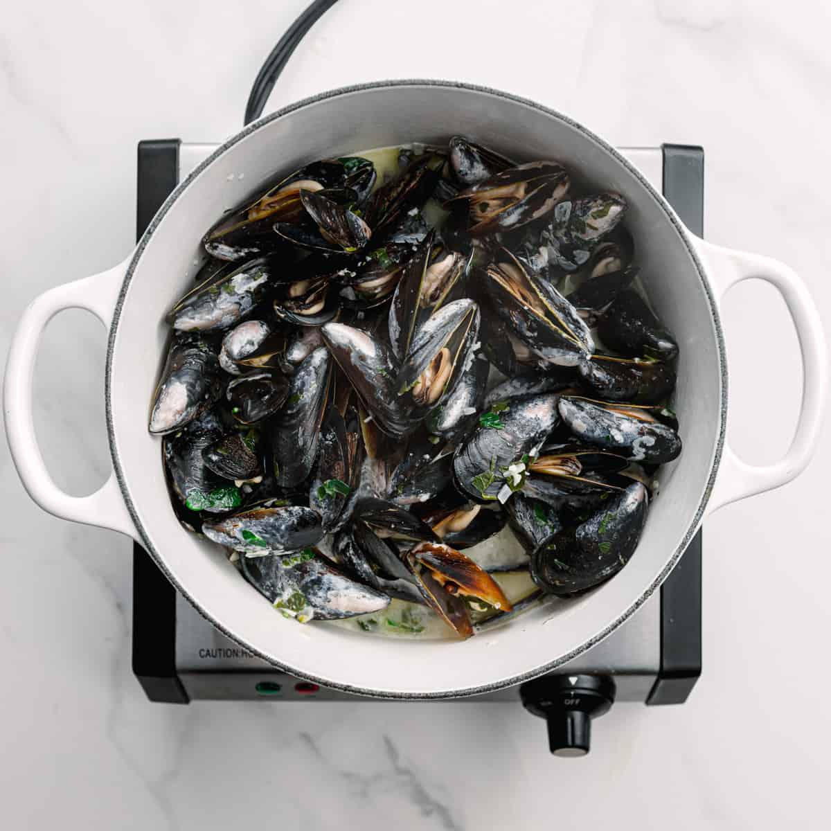 cooked mussels in white wine sauce.